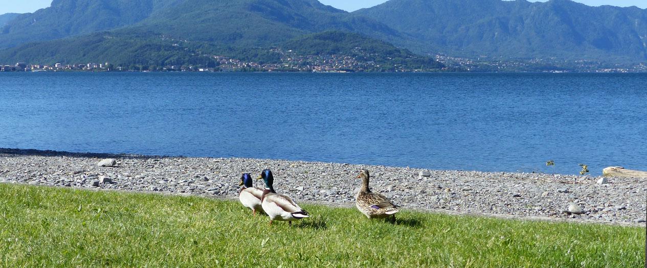 Die atemberaubende Natur vom Lago Maggiore