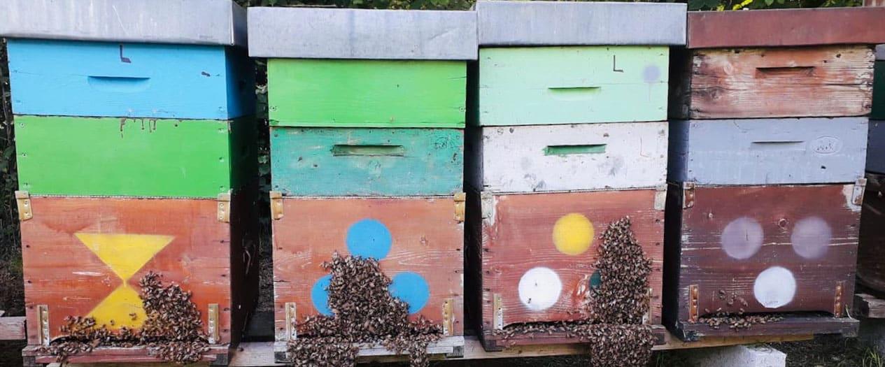 Honig von italienischen Bauern