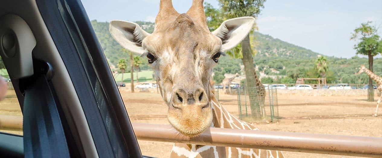 Safari Parks am Lago Maggiore besuchen