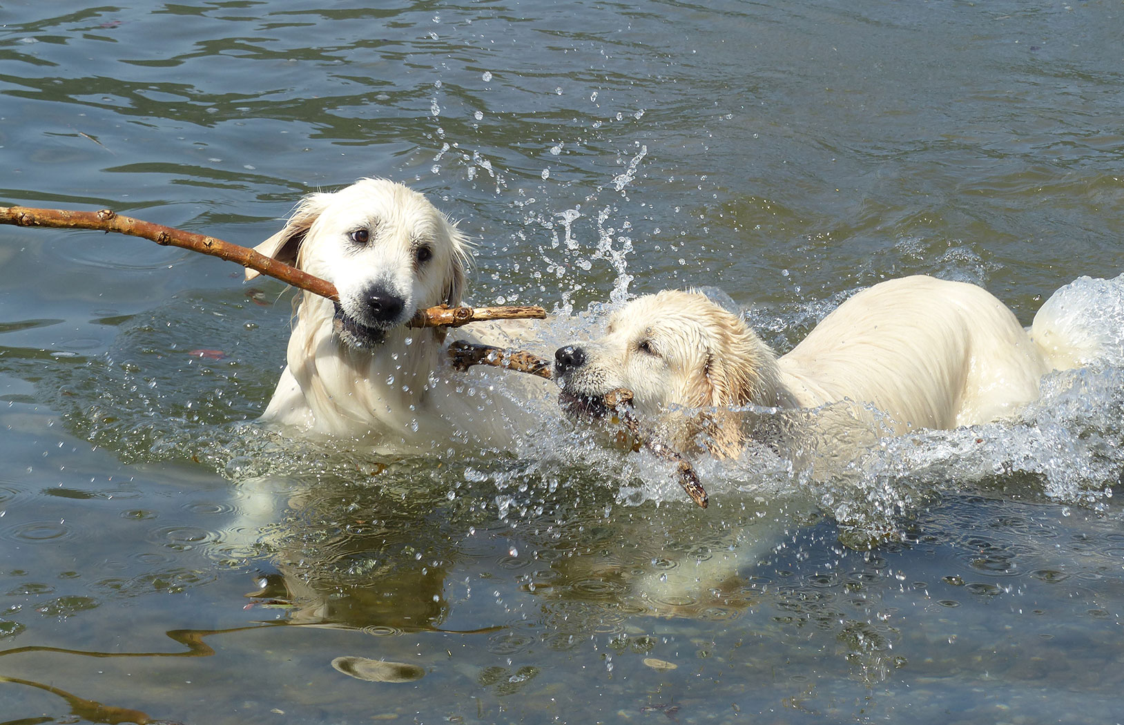 Hundefreundliches Camping in Nord-Italien